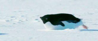 Как не набрать лишние килограммы зимой: разбор мнение эксперта