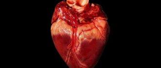 Как сварить свиное сердце целиком: время приготовления, полезные советы